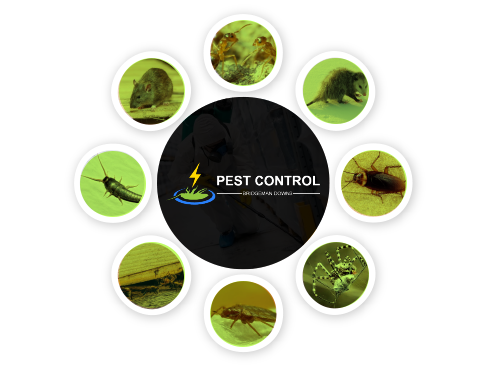 Pest Control Benowa