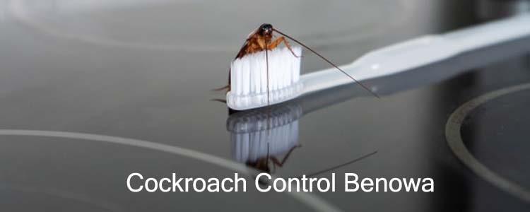 Cockroach Control Benowa